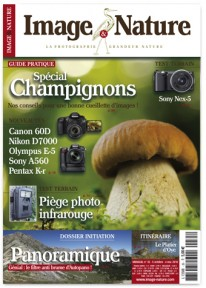 champignon-publication-photo