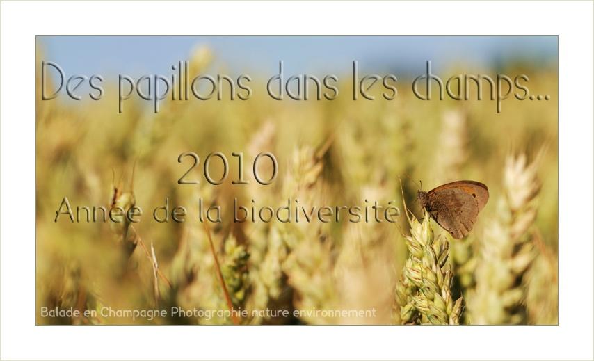 Papillon dans un champ de blé: agriculture et biodiversité