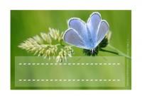 Insectes et petites bêtes: étiquettes à imprimer