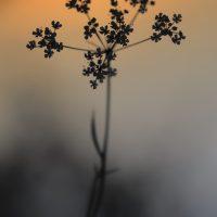 bonus-fleur_GF