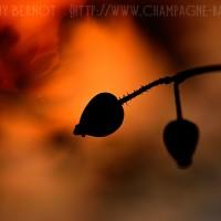 coucher-de-soleil-photo