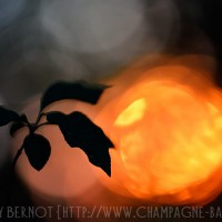 lumiere-rouge-macro