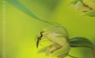 110810-orchidee-19