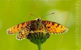 papillon-entete