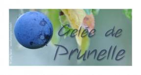 prunelle-gelee-liqueur-confiture